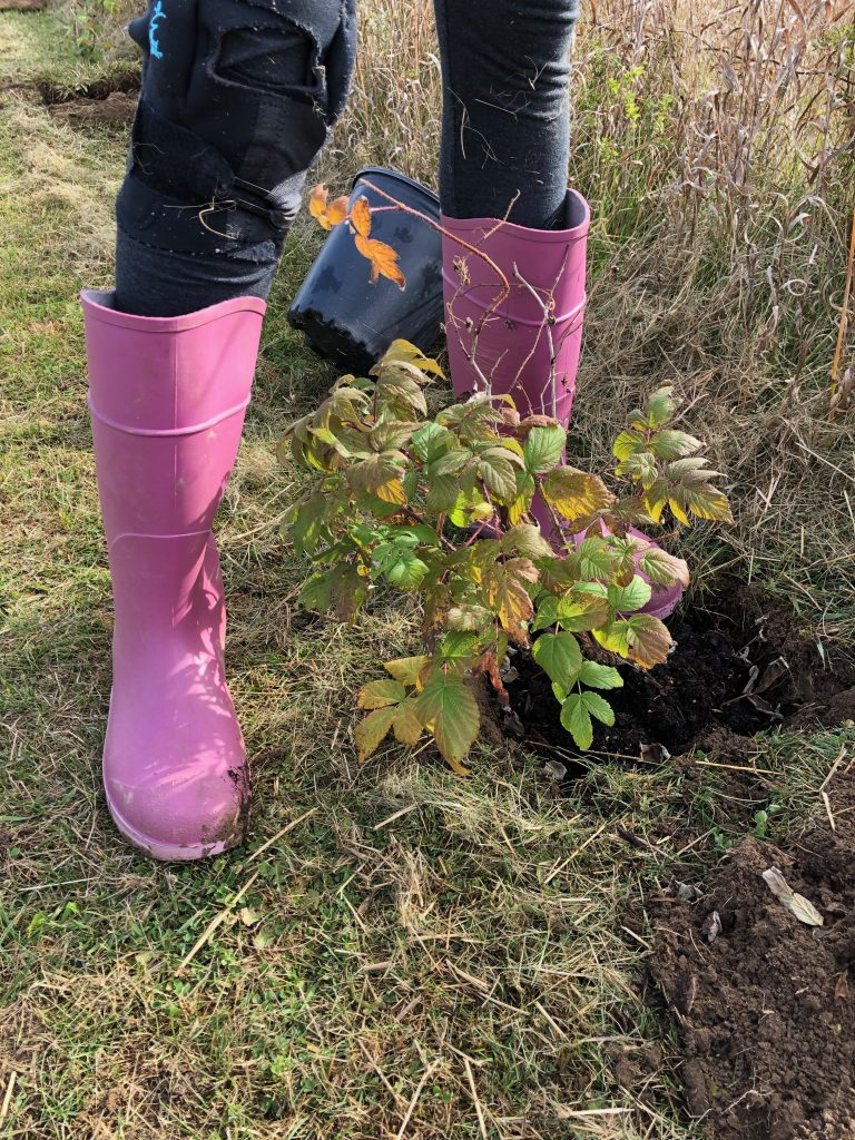 Tree planted infront of pink boots