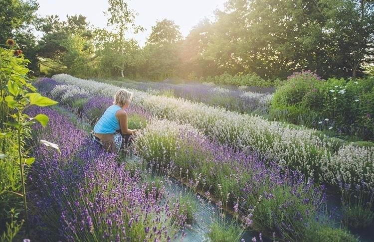 Woman in Lavender Blu Field