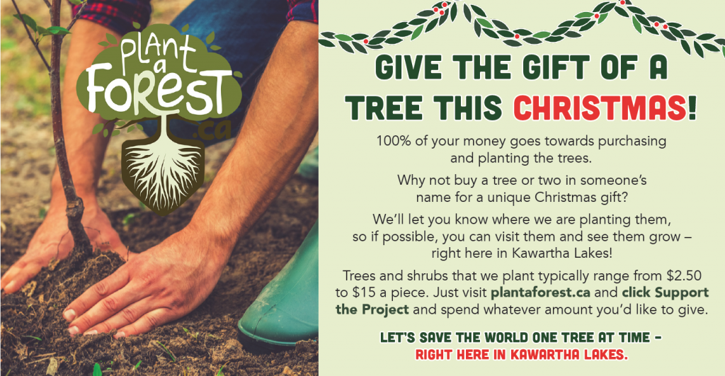 Plant A Forest Christmas Ad